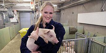 image: Snart kan juleribba være laget av griser vokst opp på tømmer