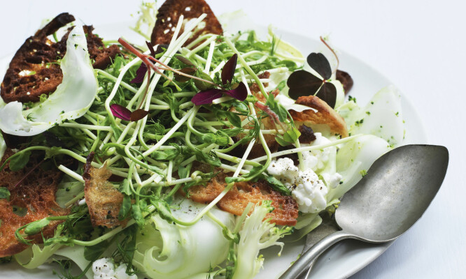 Brokkolisalat med ertespirer, krutonger og cottage cheese er perfekt som siderett til kjøtt- eller fiskeretter, men metter også godt som hovedrett. FOTO: Colombus Leth