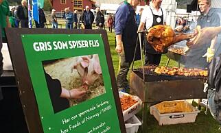 """PÅ GRILLEN: """"Woody"""" smaker godt, mente folk på Dyrsku'n i Seljord nylig. Foto: Ingrid Marie Håkenåsen"""