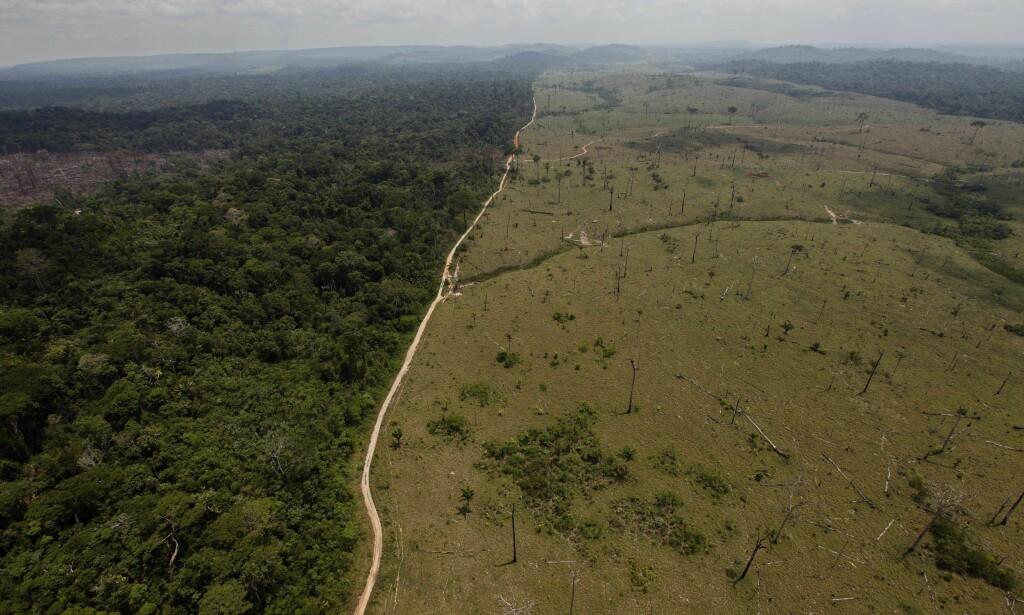 UTSATT SKOG: Å stoppe avskogingen av verdens regnskoger, som Amazonas, er nødvendig for å nå målene i Parisavtalen. Norge har tatt lederskap internasjonalt for å redde skogen, men får kritikk fra Riksrevisjonen for manglende kontroll og usikre resultater. Foto: Andre Penner / AP Photo / File / NTB Scanpix