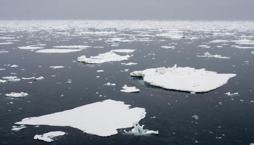 Nei, isarealet ved Nordpolen er ikke tilbake på 1979-nivå