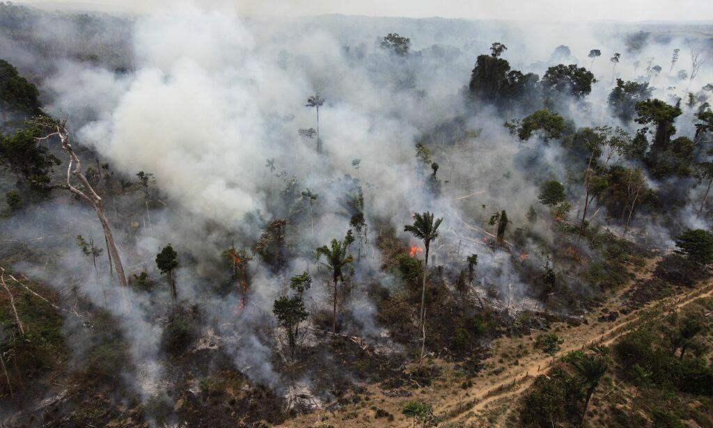 image: Klimatrusselen overdøver trusselen mot naturmangfold. Det er det ingen grunn til