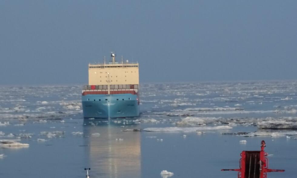 PIONERFERD: Her er Venta Mærsk på vei gjennom isen. Den nordlige sjørute kan være en gylden mulighet for skipsfartsnæringen, men har også store miljømessige utfordringer. Foto: Rusatom