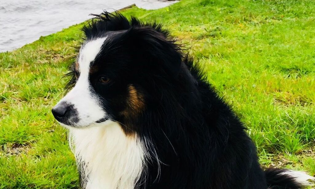 image: Hunden Linc (1) ble tatt av uværet ved Lindesnes fyr