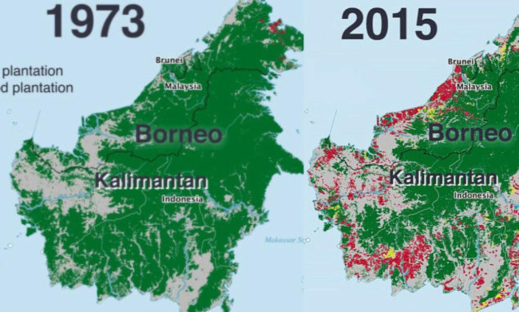 STORE ENDRINGER: Kartet over Borneo illustrerer hvordan den sårbare regnskogen blir borte grunnet omfattende palmeolje-produksjon. Foto: Kuang Keng Kuek Ser/PRI