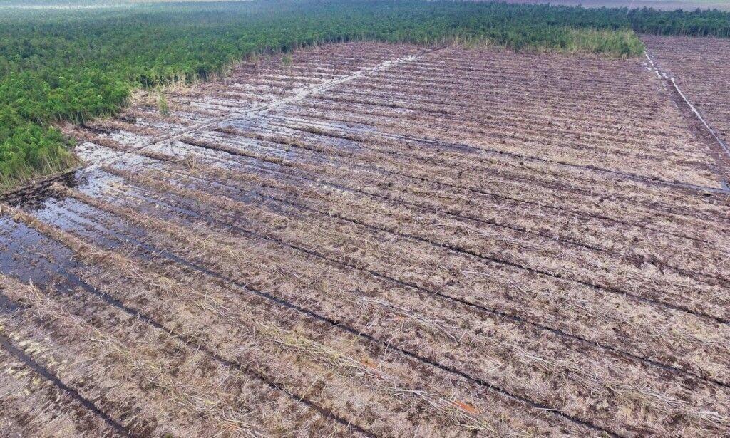 MASSIV AVSKOGING: Dette bildet fra november 2017 viser ødeleggelsene på regnskogen i Borneo. Foto: Regnskogfondet