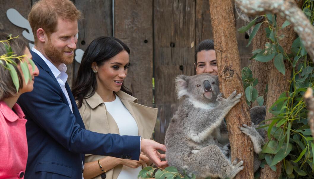 FLERE BESØK: Prins Harry og hertuginne Meghan besøkte også dyreparken Taronga der de fikk møte koalabjørnen Ruby. Foto: NTB Scanpix