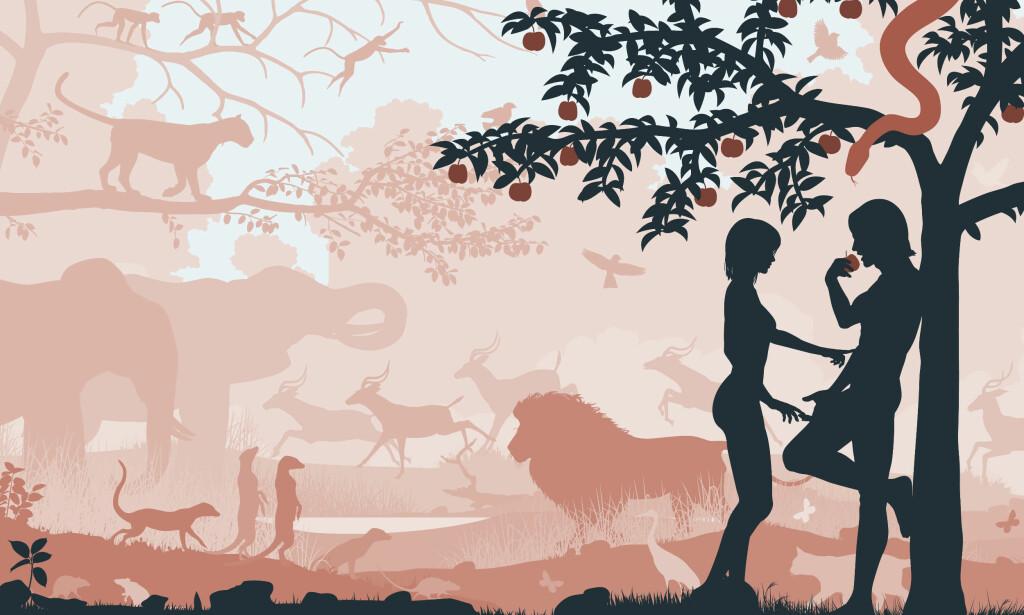 OM LIV OG DØD: Forfatter Ole Robert Sunde skriver om det å være med inn i livet og om å ta det siste farvel. ILLUSTRASJONSFOTO: Scanpix