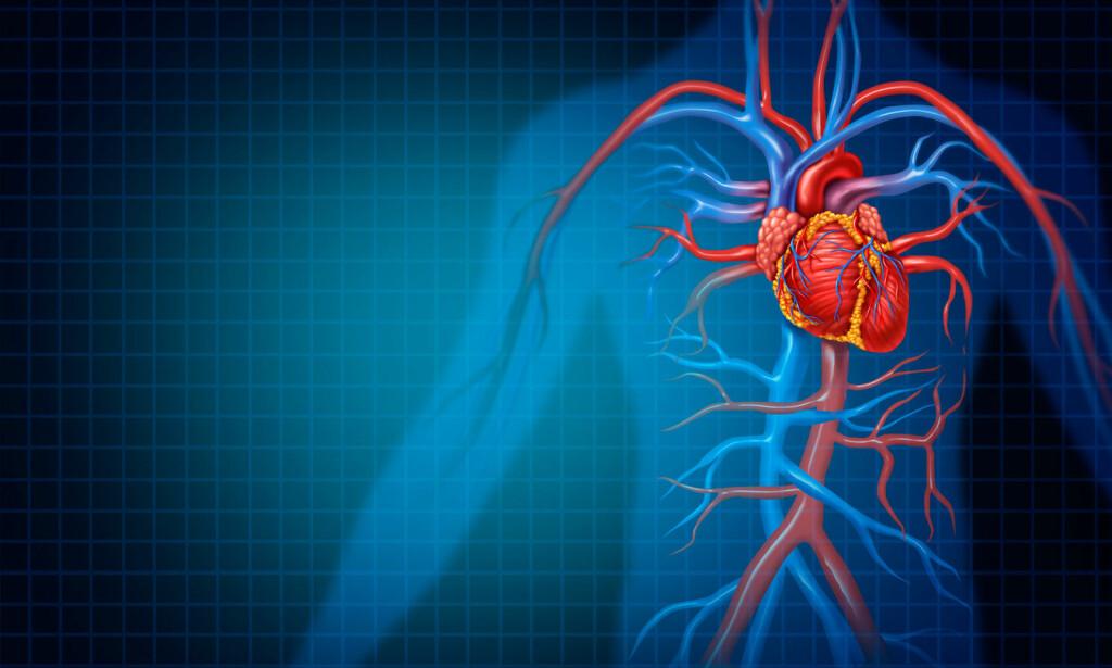NETT AV BLODÅRER: Blodårene består av: arterier, arterioler, kapillarer, venoler og vener. Illustrasjon: NTB Scanpix/Shutterstock