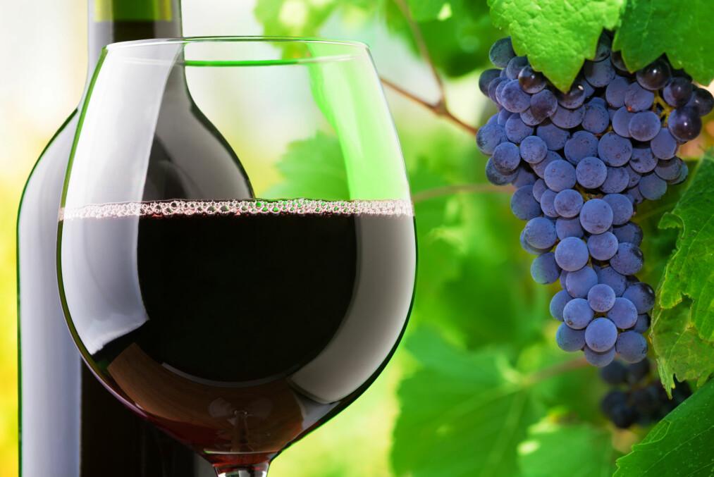 <strong>ET GODT UTVALG:</strong> Blant de røde er det først og fremst Piemonte som er representert med et godt utvalg av Barbarescoer, samt flere utgaver av den mindre kjente pelaverga-druen, blant Vinmonopolets nyheter. Foto: Shutterstock / NTB Scanpix