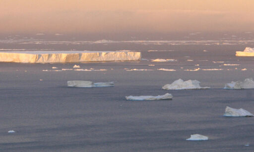 image: Vern av Antarktis krever is i magen