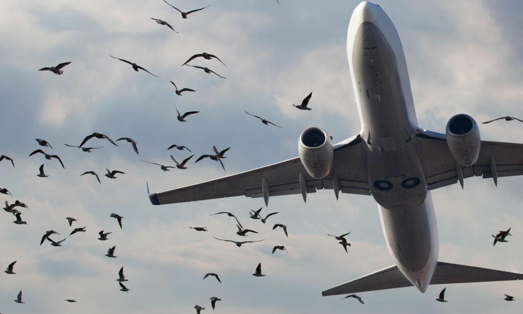 image: 10 000 fuglekollisjoner hvert år