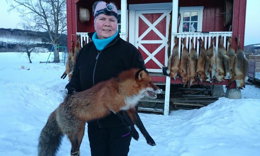image: Bjørg og Rune har skutt hundre rev siden i høst: - Flere burde gjøre som dem