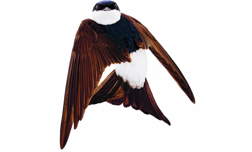 - De nyskapende fotografiene til svenske Roine Magnussons er åpenbaringer av fargespill og dynamikk der fuglenes fjærdrakt spiles ut i symmetrisk skjønnhet, sier Dagbladets anmelder Arne Dvergsdal. Foto: hentet fra boken.