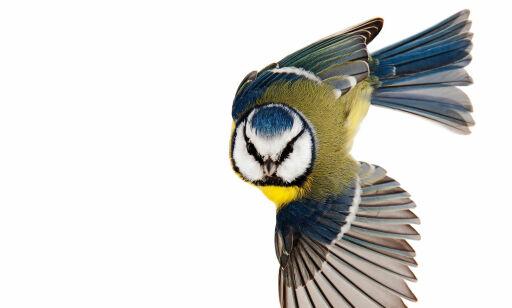 image: - Den fineste, mest fantastiske fuglebok jeg noensinne har sett!