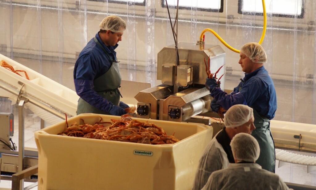 GLADE DAGER: Alt er bare idyll i Båtsfjord da den nye krabbefabrikken åpner. Her fra åpningsdagen. Foto: Andrei Kazakov.