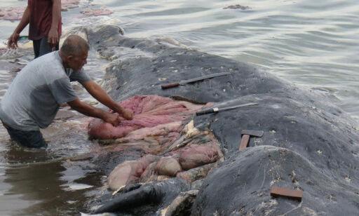 image: Gjorde rystende funn i den døde hvalens mage: - Det er virkelig grusomt