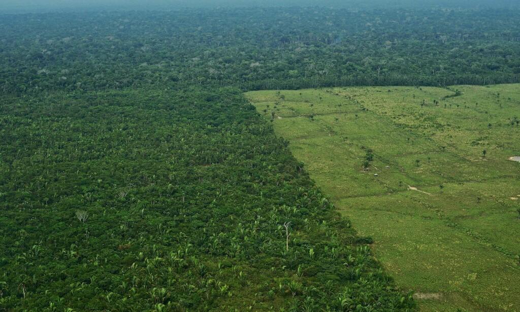 MÅ REDDES: Bevaring av tropisk regnskog, som her i Amazonas i Brasil, er nødvendig for å nå målene i Parisavtalen. Norge har i over ti år engasjert seg sterkt for å redde regnskogen, men satsinga har fått kritikk etter en knusende rapport fra Riksrevisjonen tidligere i år. Foto: Carl De Souza / AFP Photo / NTB Scanpix