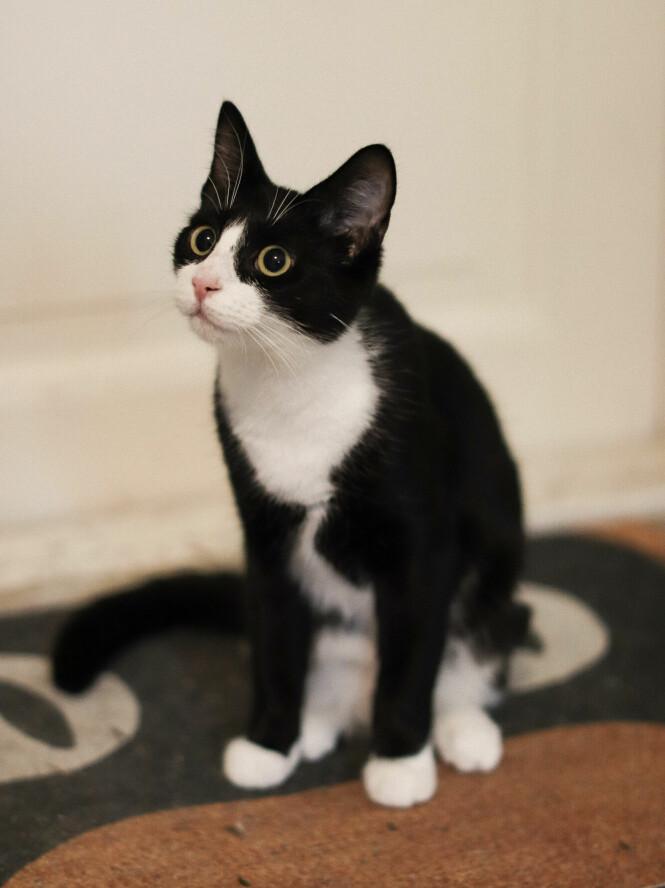 <strong>MANGE TRISTE SKJEBNER:</strong> Det er ikke alle dyr som har det like godt, og hjemløse katter er et stort problem. Heldigvis blir hundrevis av katter reddet av organisasjoner som FOD, hvert år. Og alle trenger nye hjem. FOTO: Ida Bergersen