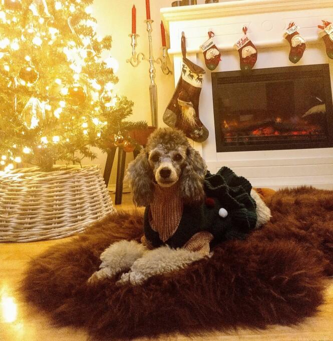 GLEDELIG FØRJULSTID: Helene er en av kjæledyrene til Victoria, som stortrivs med å få en gave i pakkekalenderen hver dag før julaften. FOTO: Privat