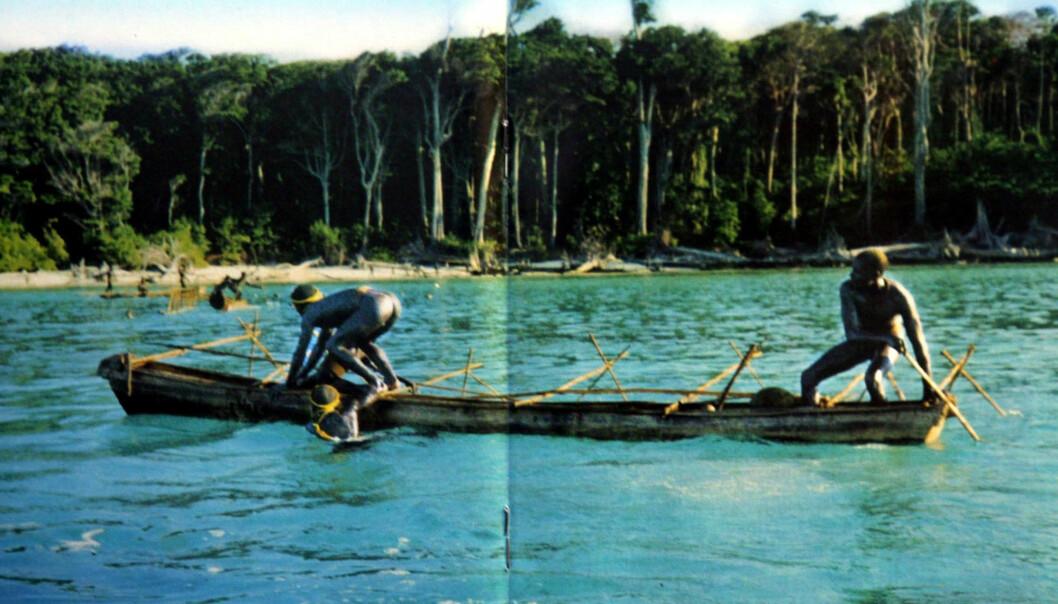 <strong>OVERLEVDE TSUNAMI:</strong> Det udaterte bildet av Senineleserne fra stammesamfunnet på en av øyene i Andamanene er tatt i forbindelse med antropologiske studier i India. Ulike stammesamfunn har eksistert i århundrer. Offisielle kilder i India har uttalt at gammel kunnskap om signaler i vinden og i havet bidro til at stammesamfunnene overlevde tsunamien i 2004. Foto: AP/ NTB Scanpix