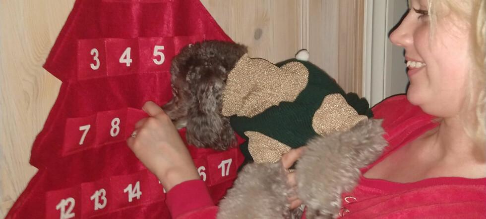Victoria (26) kjøper juekalendere til alle kjæledyrene sine