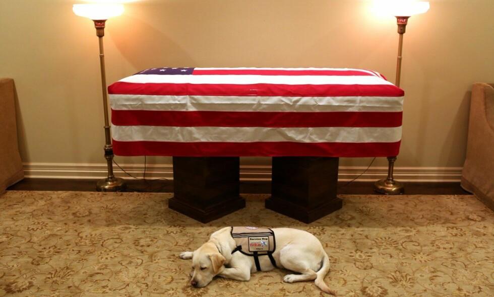 Mandag delte avdøde George H.W. Bushs pressetalsmann, Jim McGrath, et bilde som nå rører USA.  Det viser Bushs hjelpehund Sully som ligger foran presidentens kiste, som er svøpt i det amerikanske flagget. Foto: Jim McGrath / Twitter