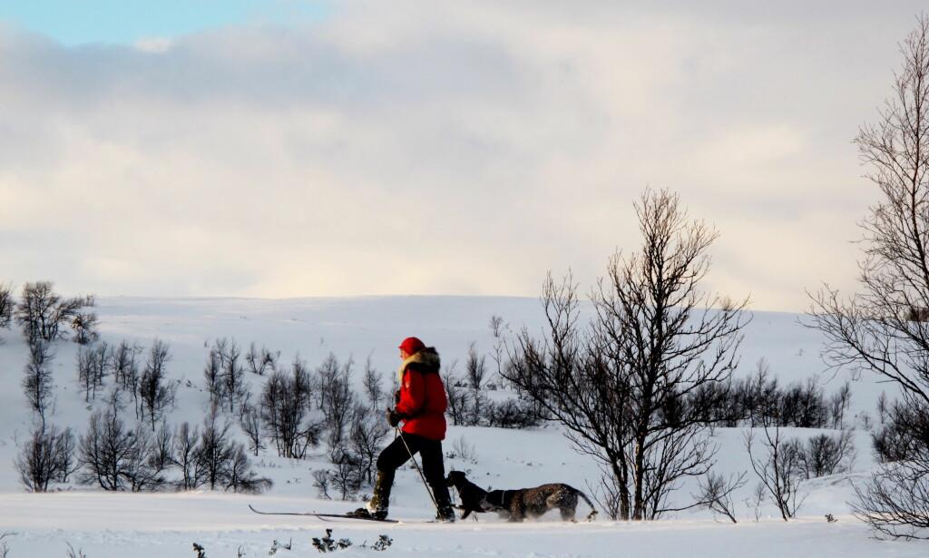 UT PÅ TUR: Vinteren har latt vente på seg i år. Denne uka er det ventet mer snø og gode sjanser for å snøre på seg skiene flere steder i landet. Foto: Thomas Rasmus Skaug/ Dagbladet