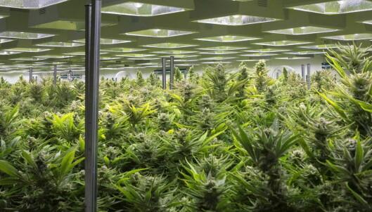 Regulert salg av cannabis er det motsatte av frislipp