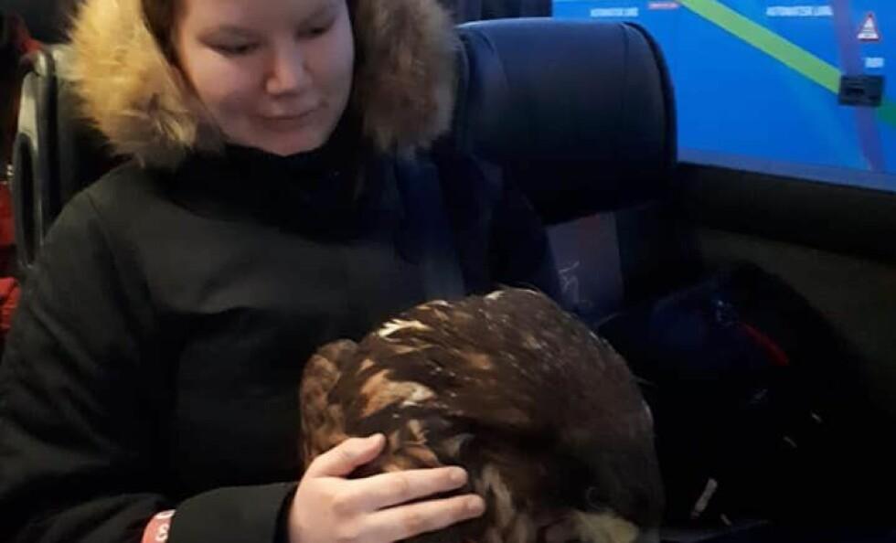 FIKK SITTE PÅ: Ørnen krasjet med en lykt på taket på bussen, men fikk sitte på til dyrlegen. Foto: Privat