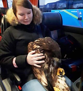 KJØRTE BUSS: Ørnen tok bussen til dyrlegen for å sjekke skadene den fikk i kollisjonen. Foto: Privat