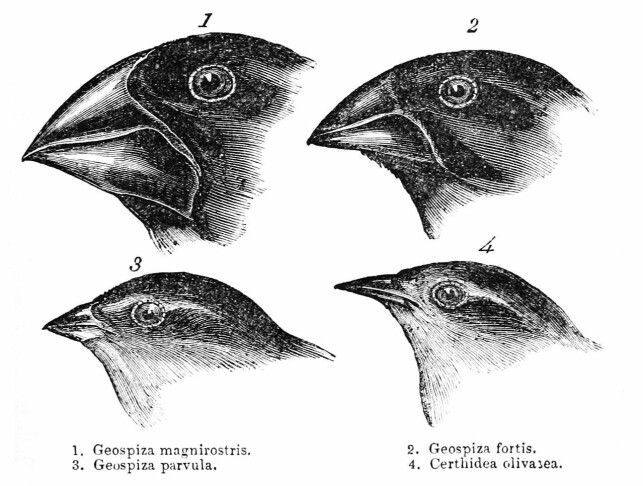 📸: Charles Darwin