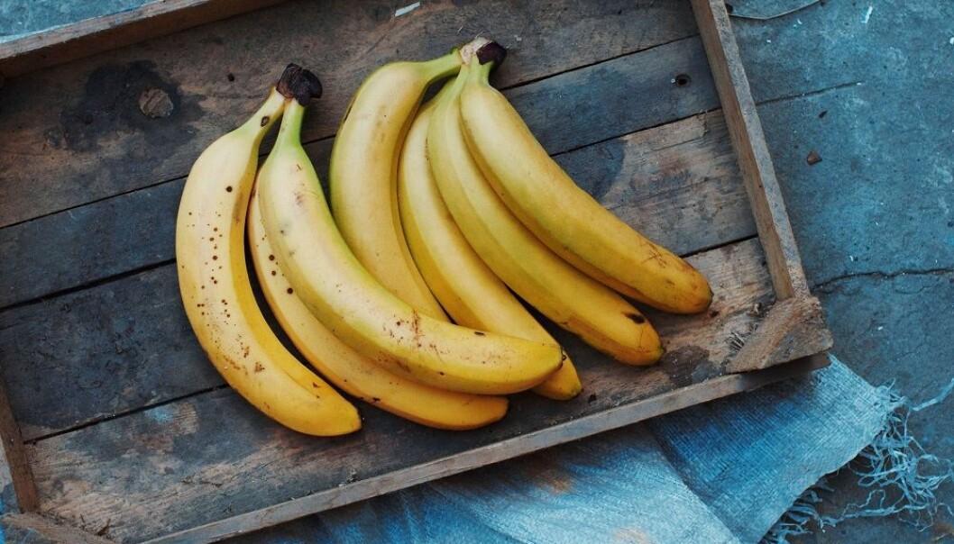 SKAL IKKE I KJØLESKAP: Bananer liker seg best i 12 grader. FOTO: Shutterstock