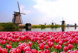 KOMMER ORDET HERFRA? I Nederland sier man også bestemor/bestefar. Foto: Shutterstock