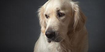 image: Mange dyr er redde på nyttårsaften. Slik kan du hjelpe dem
