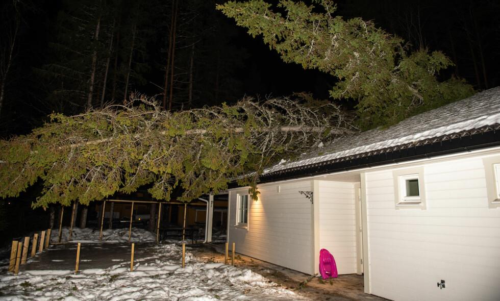 SKADER: I løpet av noen få timer tirsdag kveld, rakk vinden å gjøre stor skade på denne tomta i Skogsbygda i Nes. Foto: Øistein Norum Monsen