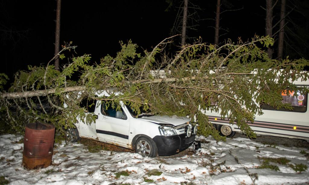 SKAL VRAKES: To av familiens biler havnet under trær tirsdag kveld. Denne skal vrakes, forteller Lorentzen. Foto: Øistein Norum Monsen