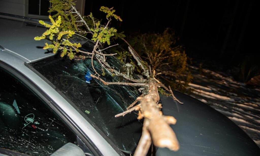 KNUST: Et tre har knust frontruta på en av familiens to biler. Foto: Øistein Norum Monsen