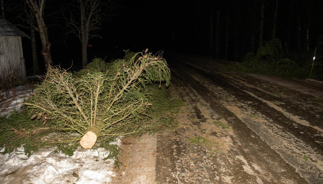 <strong>UVÆR:</strong> Knekte greiner og trær ligger spredt langs veien på Nes på Romerike. Foto: Øistein Norum Monsen/Dagbladet