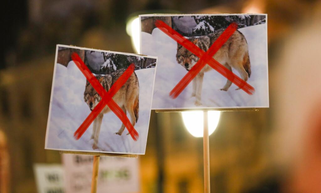 ULVEPOPULISME: Ulvepopulismen er ikke bare farlig for det norske artsmangfoldet, men også for demokratiet vårt, skriver artikkelforfatter. Bildet er fra fakkeltoget mot mot regjeringens ulvepolitikk i Oslo tirsdag. Foto: Cornelius Poppe / NTB Scanpix