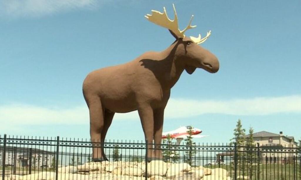 VERDENS NEST STØRSTE: Mac the Moose i Moose Jaw i Canada.