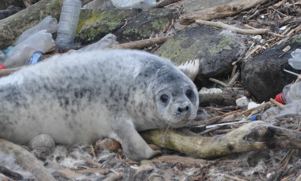 image: Nytt sjokkerende plastfunn i havdyrene