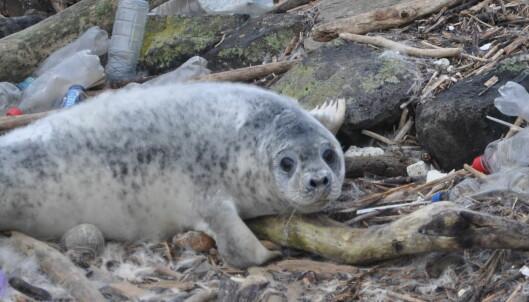 Nytt sjokkerende plastfunn i havdyrene