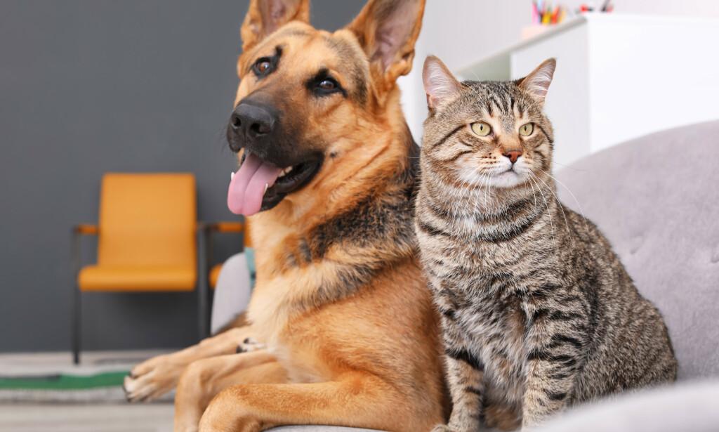 TRYGGERE: Med innføring av dyrepoliti over hele landet og ID-merking av hunder og katter, vil våre firbeinte venner få en tryggere hverdag, skriver innsenderen. Foto: Shutterstock / NTB Scanpix