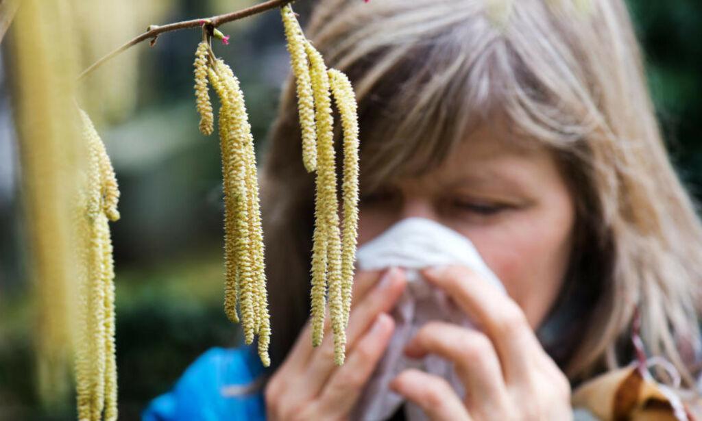image: - På høy tid å finne fram allergimedisinene