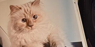 image: Katten kan arve Karl Lagerfelds kjempeformue