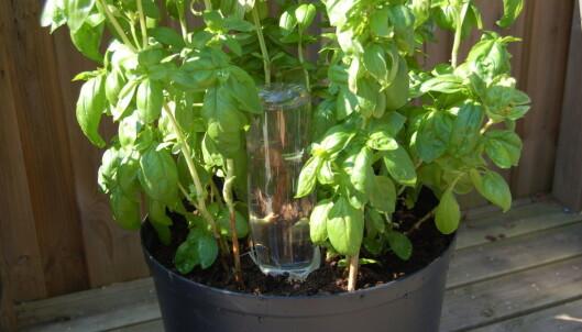 <strong>SELVVANNER:</strong> En flaske og litt tøy kan holde liv i plantene dine mens du koser deg på ferie. Foto: Christina Honningsvåg