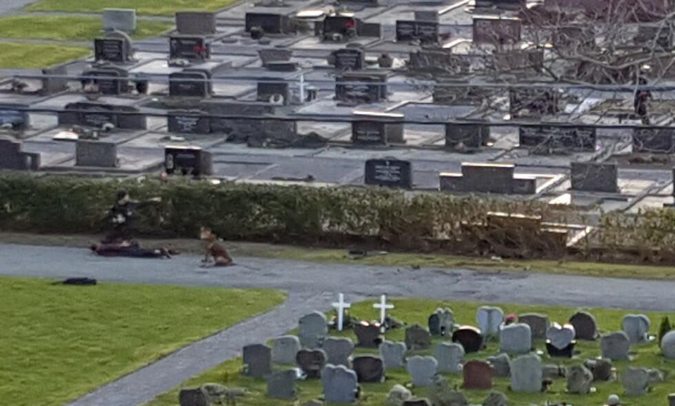 PÅGRIPES: Her pågripes den 48-årige haugesunderen på Vår Frelsers gravlund tirsdag ettermiddag. Foto: Tipser