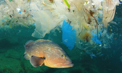 image: Plastfunnet sjokkerer forskerne: - Det er over alt