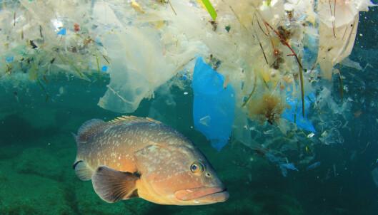 Plastfunnet sjokkerer forskerne: - Det er over alt